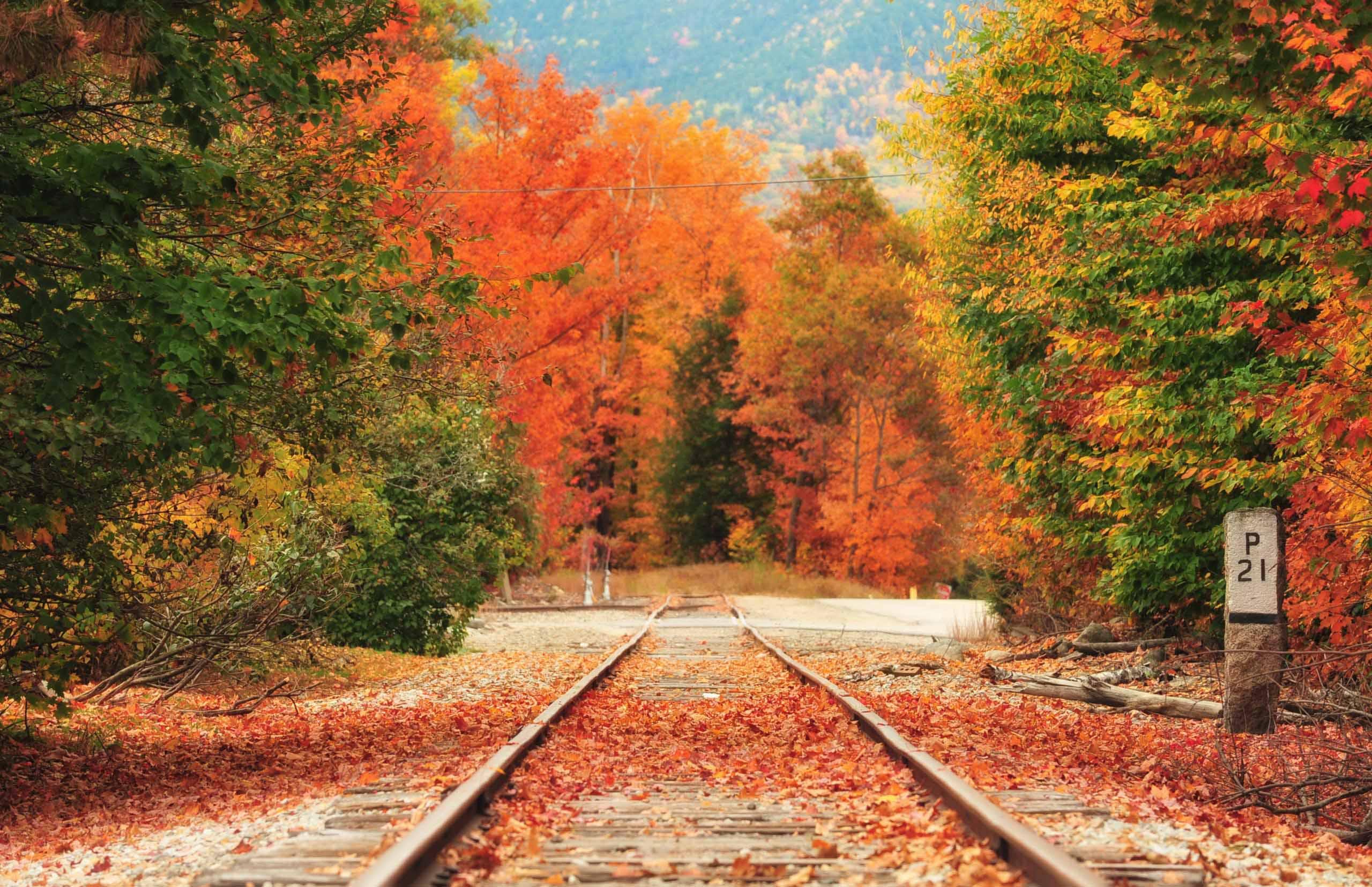 mùa thu con đường ở thị trấn