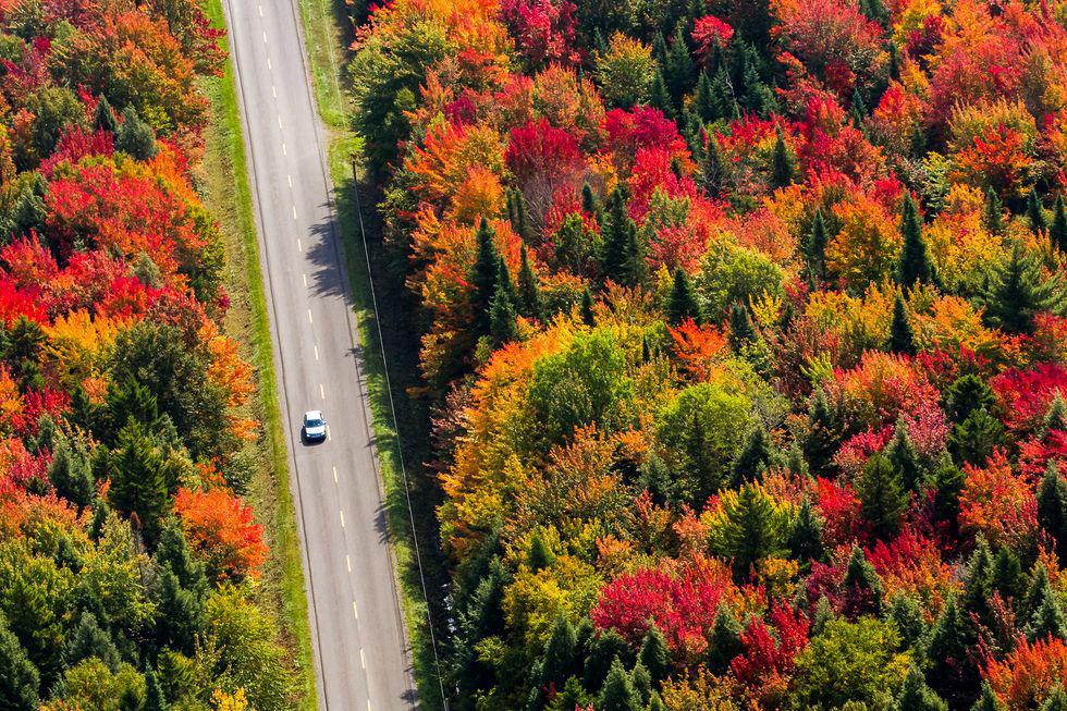 mùa thu con đường