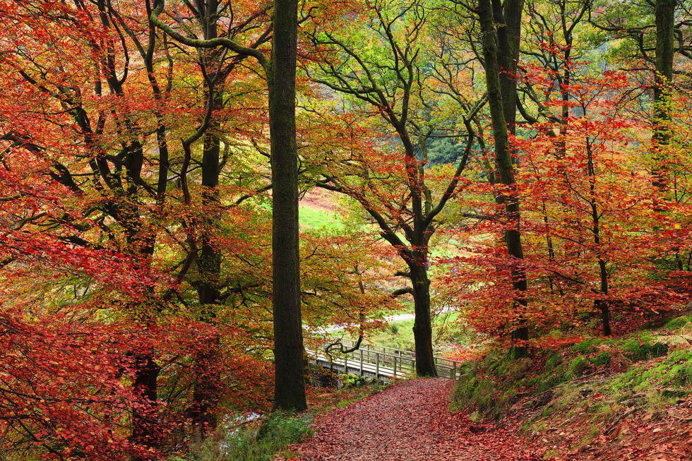 mùa thu khu rừng