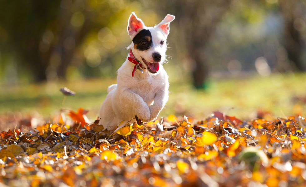 mùa thu và chú chó