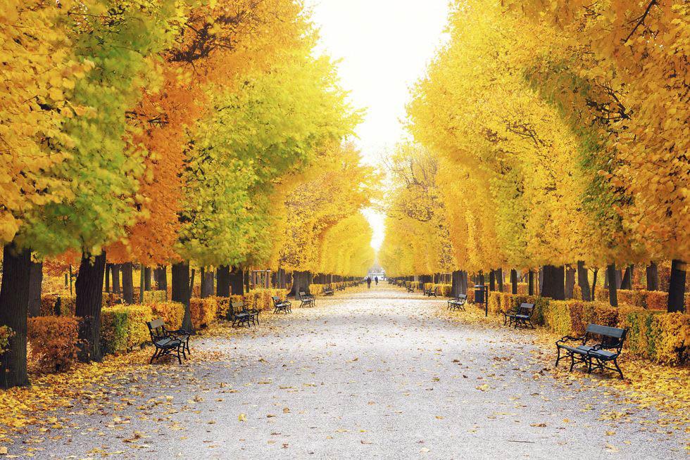 mùa thu xanh vàng