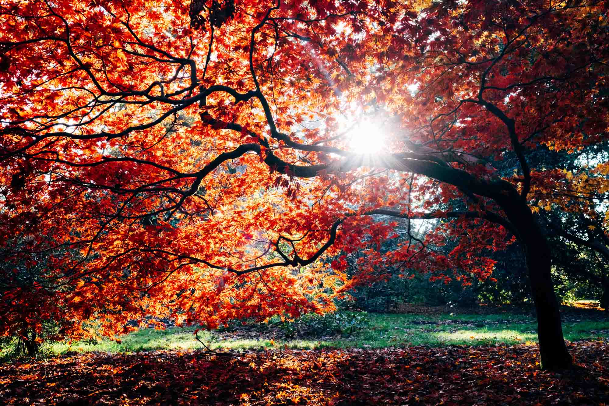 cành cây và ánh nắng mùa thu