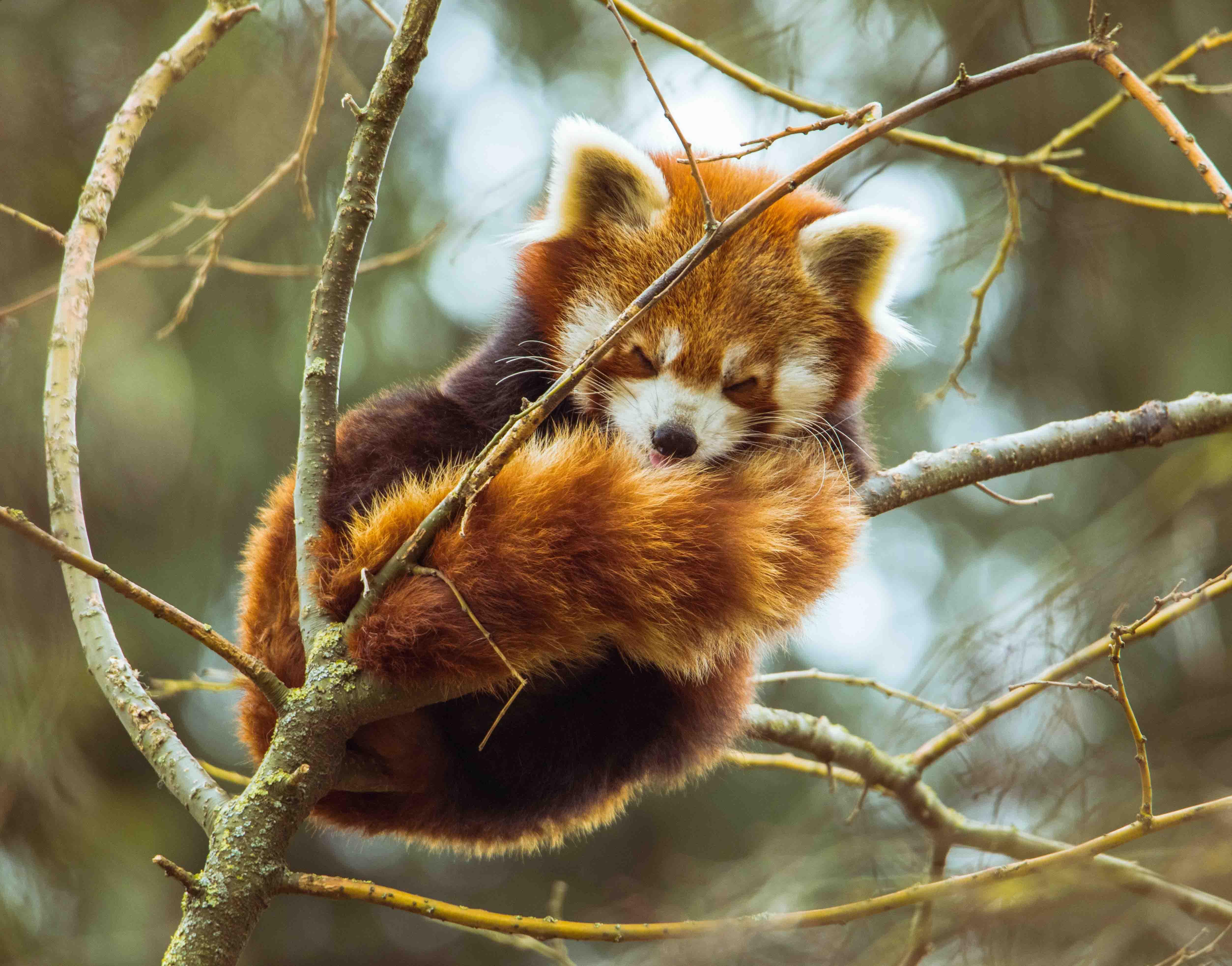 mùa thu động vật ngủ