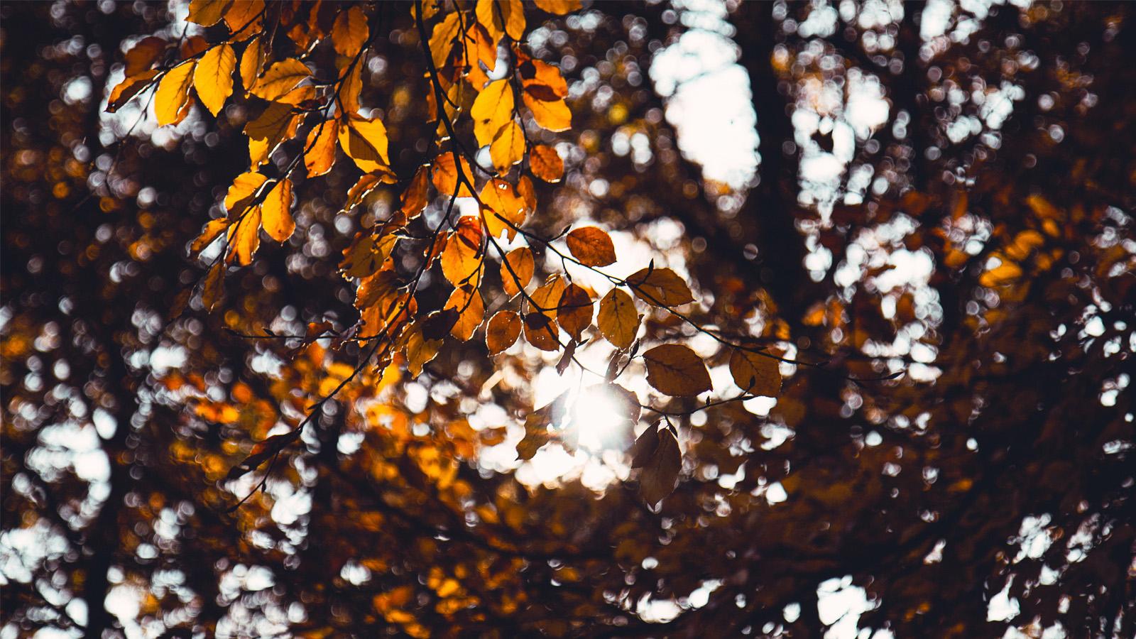 tiếng lá mùa thu