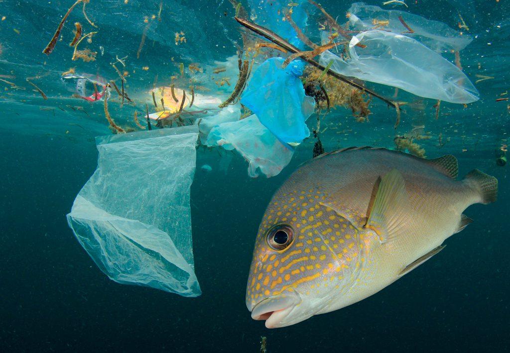 mỹ phẩm giảm thiểu rác thải đại dương