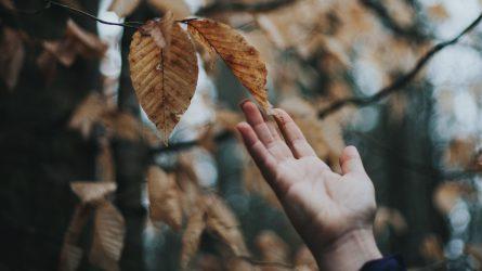 Những điều thú vị về mùa Thu và sự thay đổi tâm trạng con người