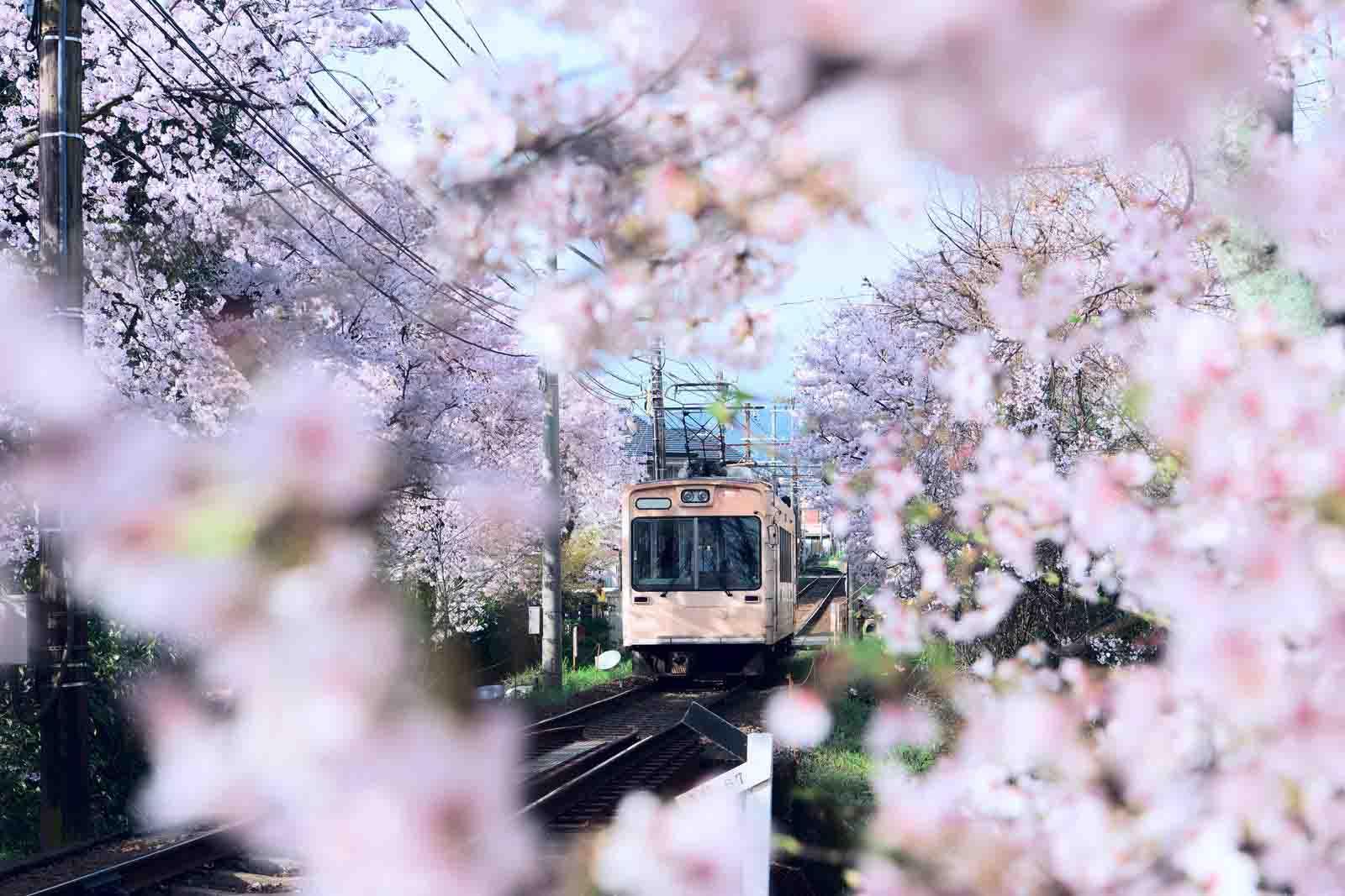 địa điểm kyoto