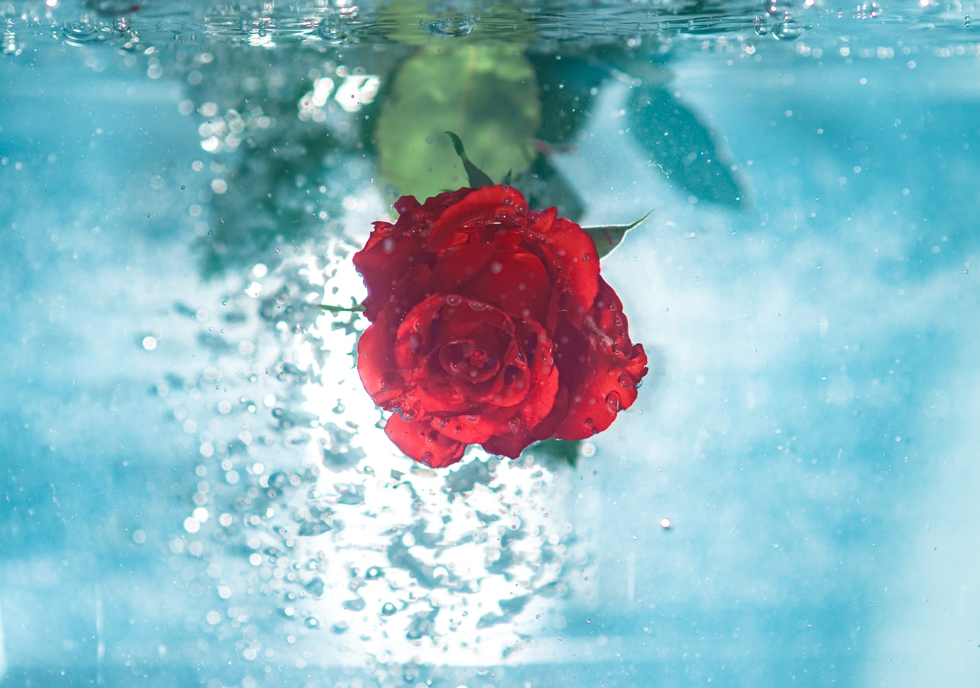 Xông hơi da mặt an toàn từ cánh hoa hồng.