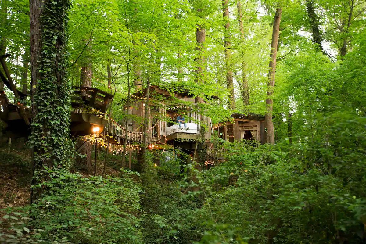 nhà trên cây xanh tươi