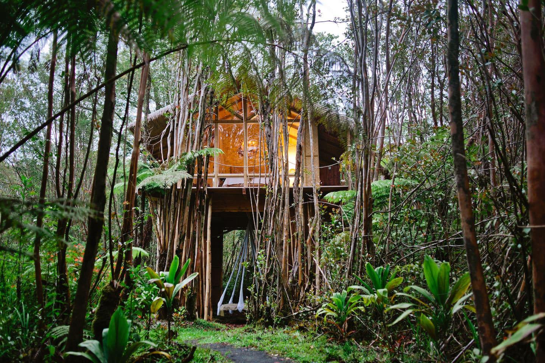 nhà trên cây hoang dã