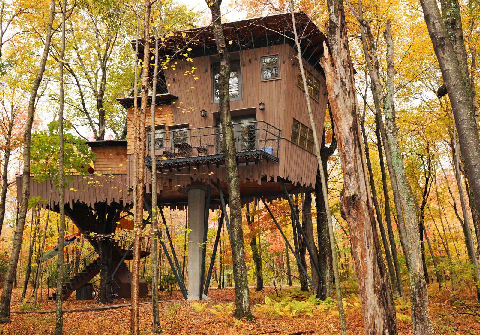 nhà trên cây lá vàng