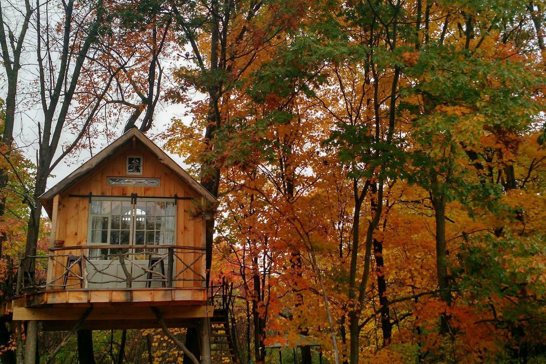 nhà trên cây mùa thu
