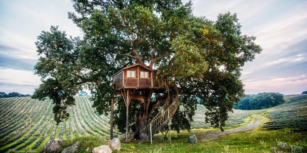 nhà trên cây sum xuê