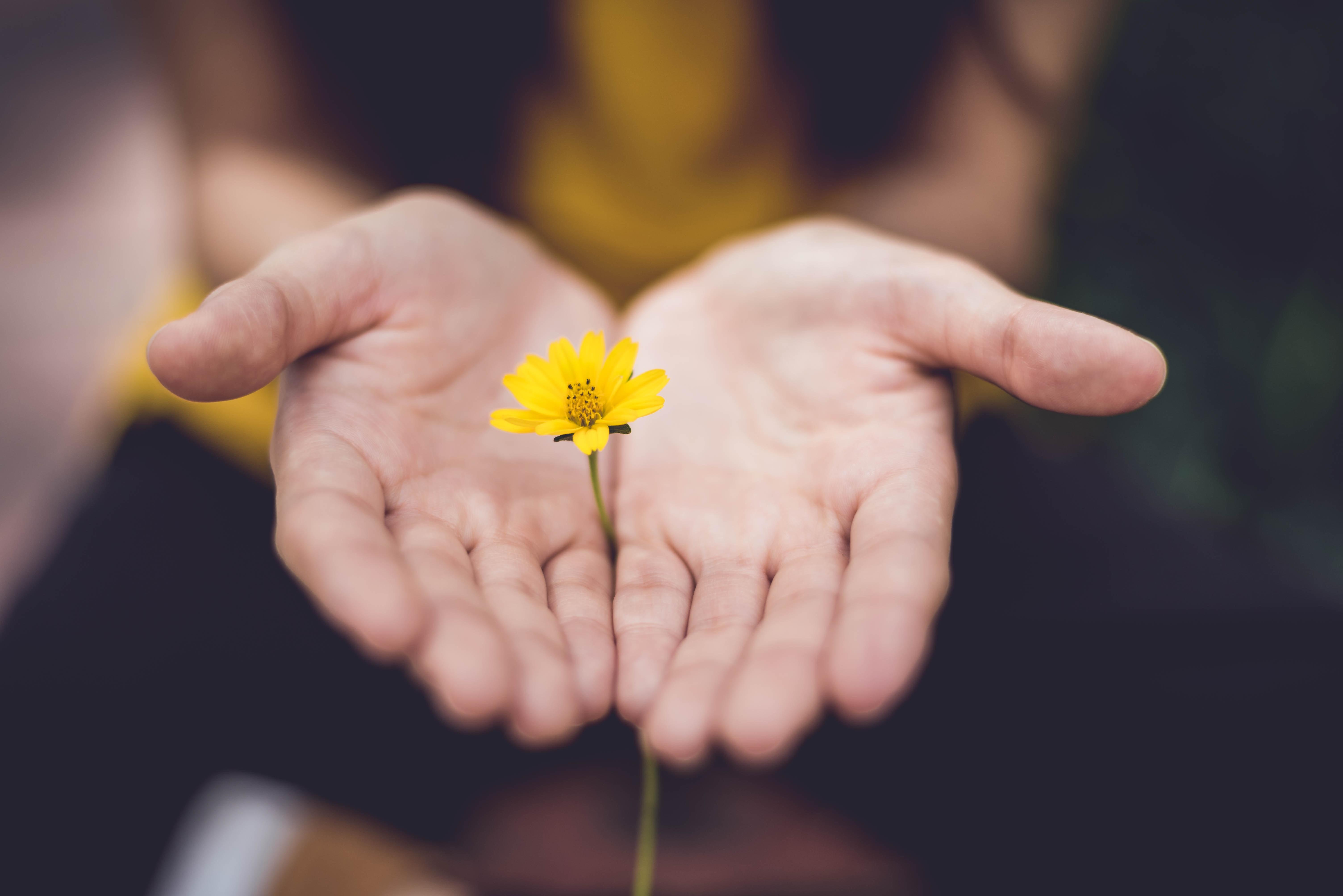 bánh xe số phận sự kỳ vọng bông hoa
