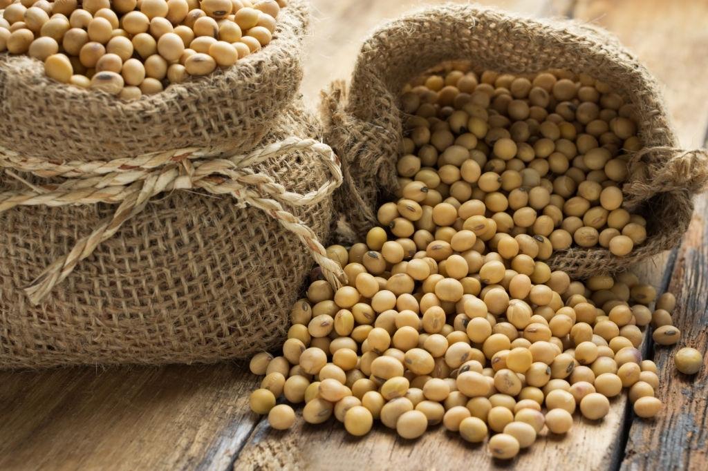 Thực phẩm chế biến từ đậu nành