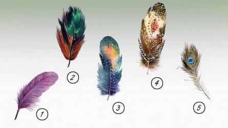 Trắc nghiệm: Chọn một chiếc lông vũ để khám phá sức mạnh bên trong bạn