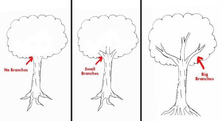 Trắc nghiệm vẽ cây của Karl Koch tiết lộ gì về tính cách của bạn
