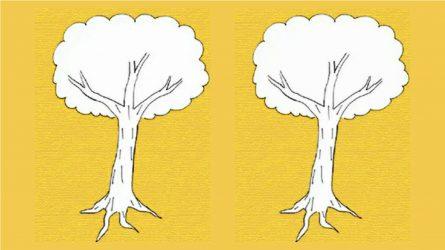 Trắc nghiệm Karl Koch: Cách vẽ cây tiết lộ điều gì về cảm xúc của bạn?