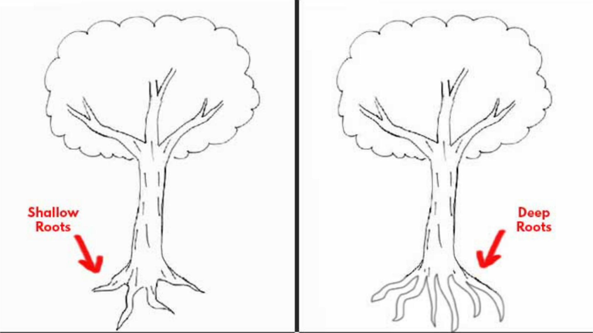 Trắc nghiệm vẽ cây Karl Koch nói lên điều gì về cá tính của bạn