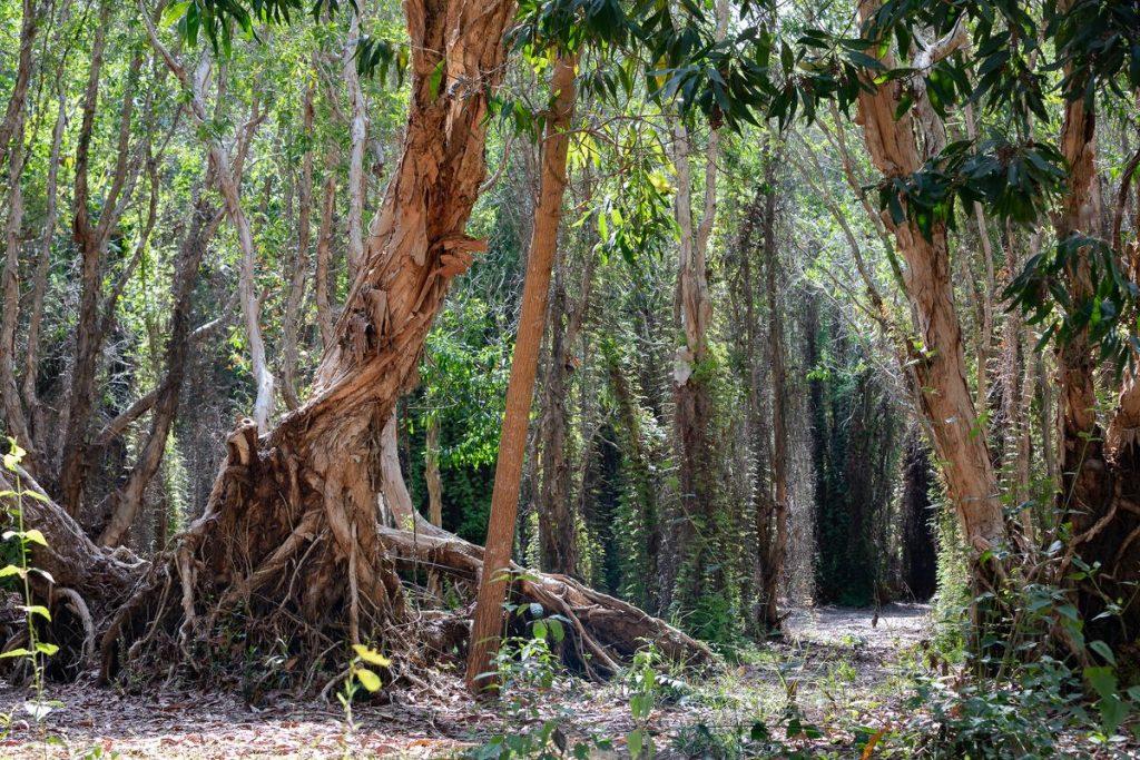 du lịch hồ tràm rừng nguyên sinh phước bửu