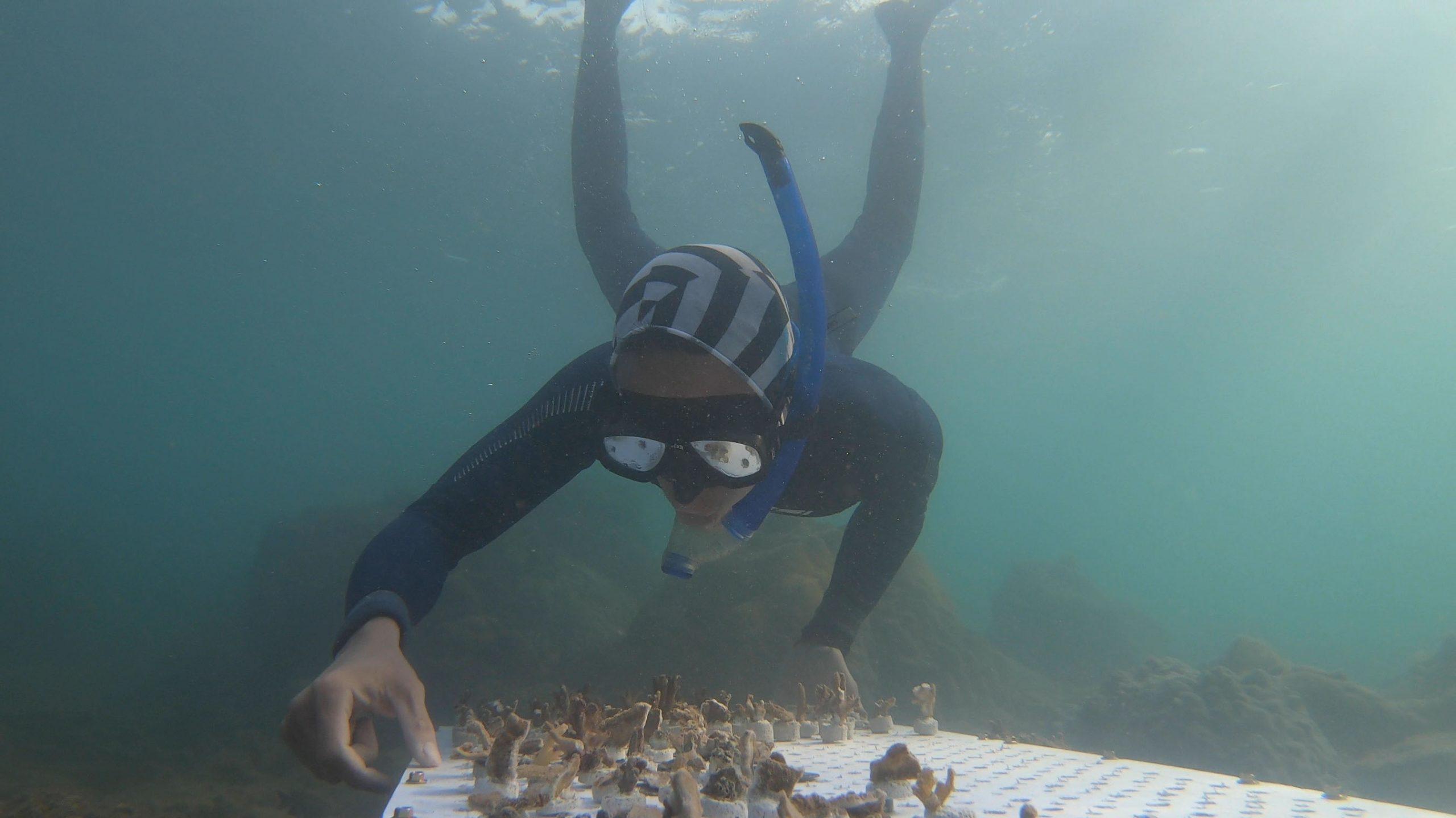 đội cứu hộ sasa bảo vệ đại dương
