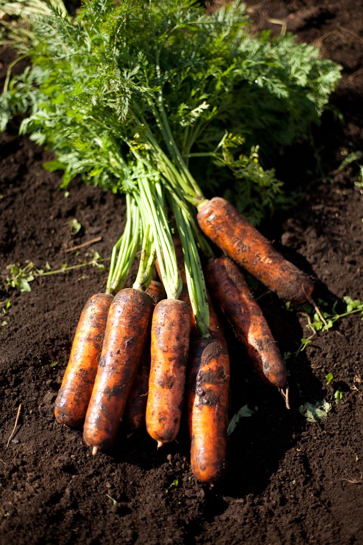 sản phẩm dưỡng tay từ innisfree ugly carrot