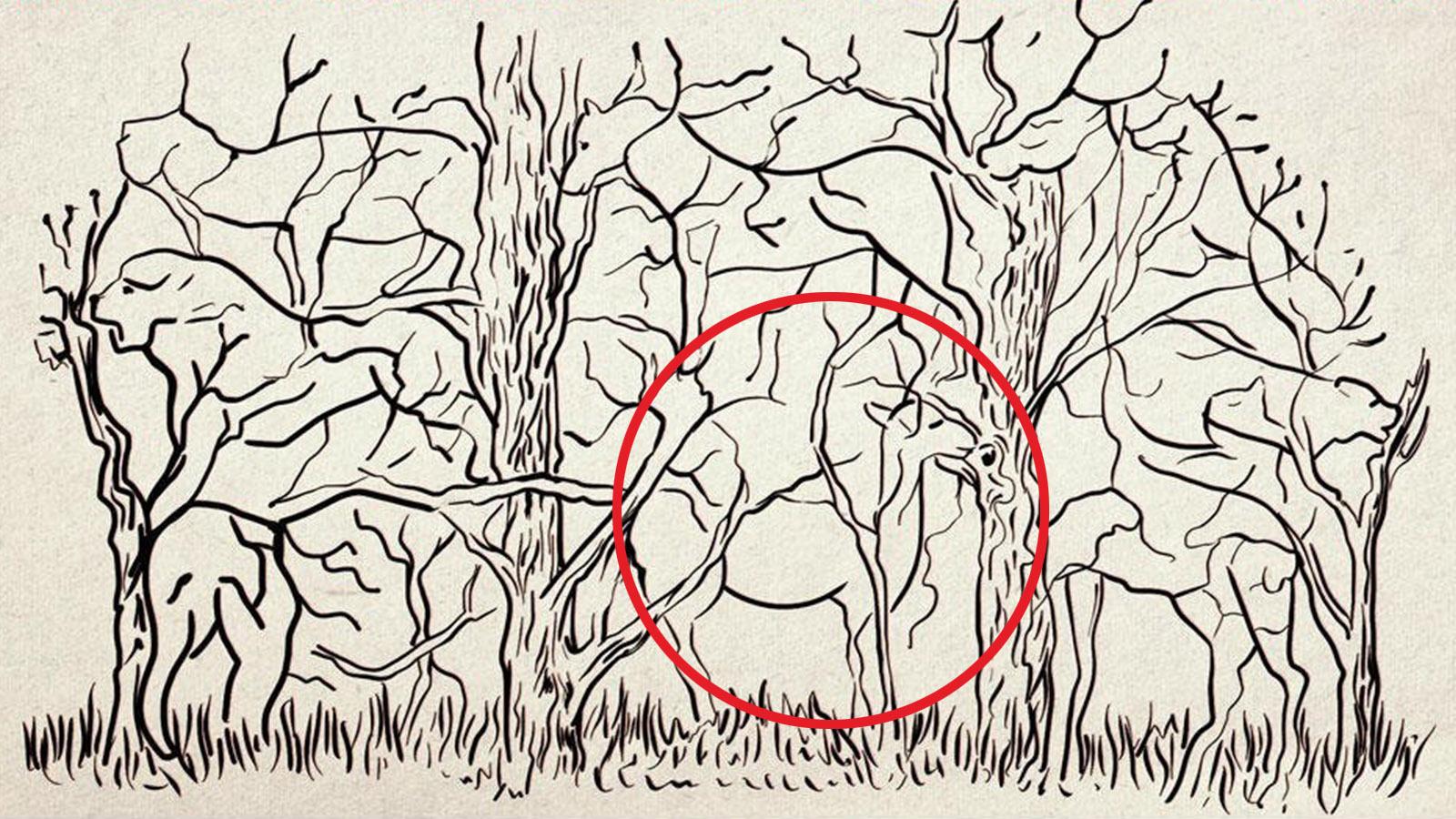 trắc nghiệm hình ảnh lạc đà