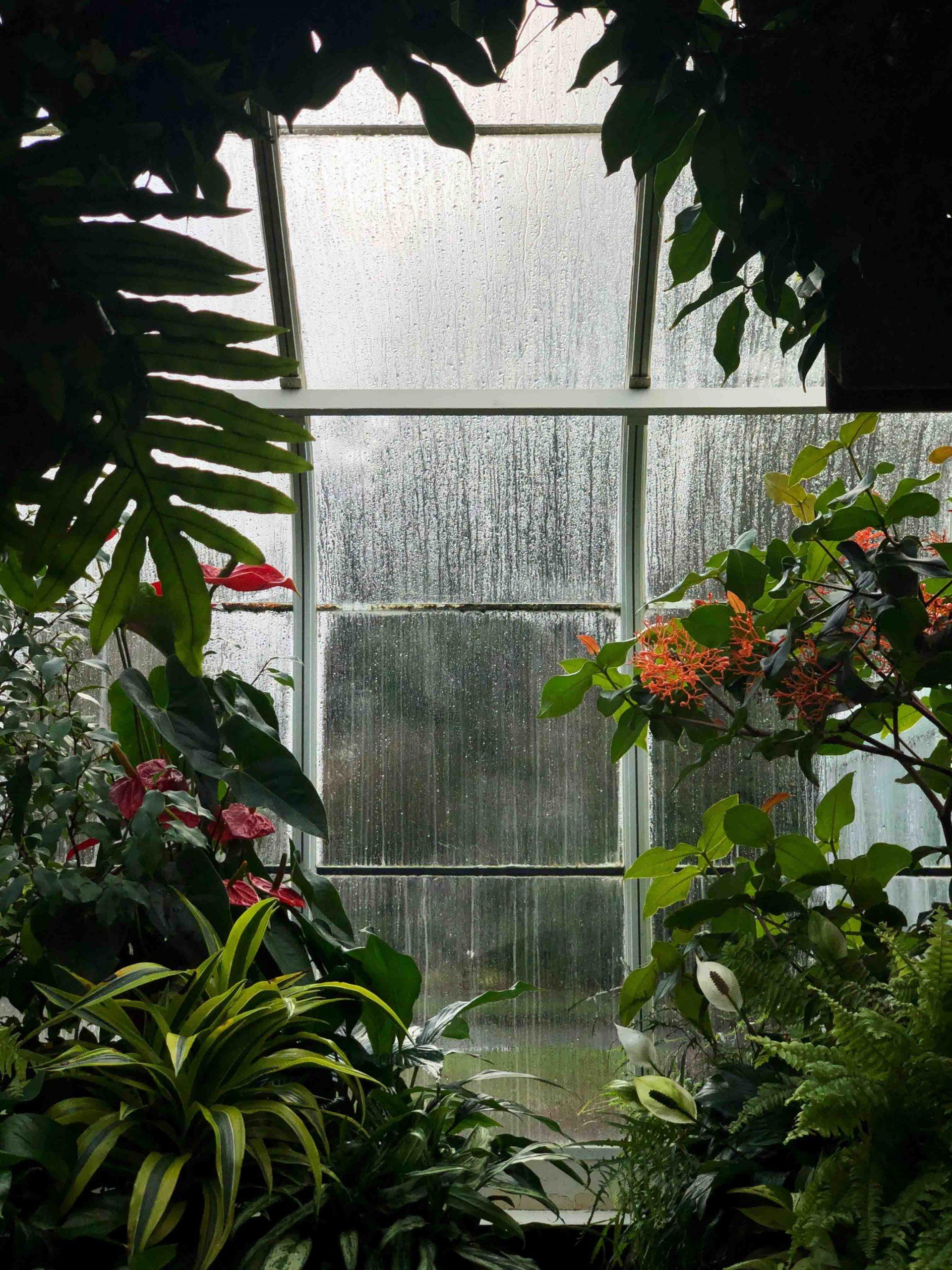 trời mưa qua ô cửa sổ