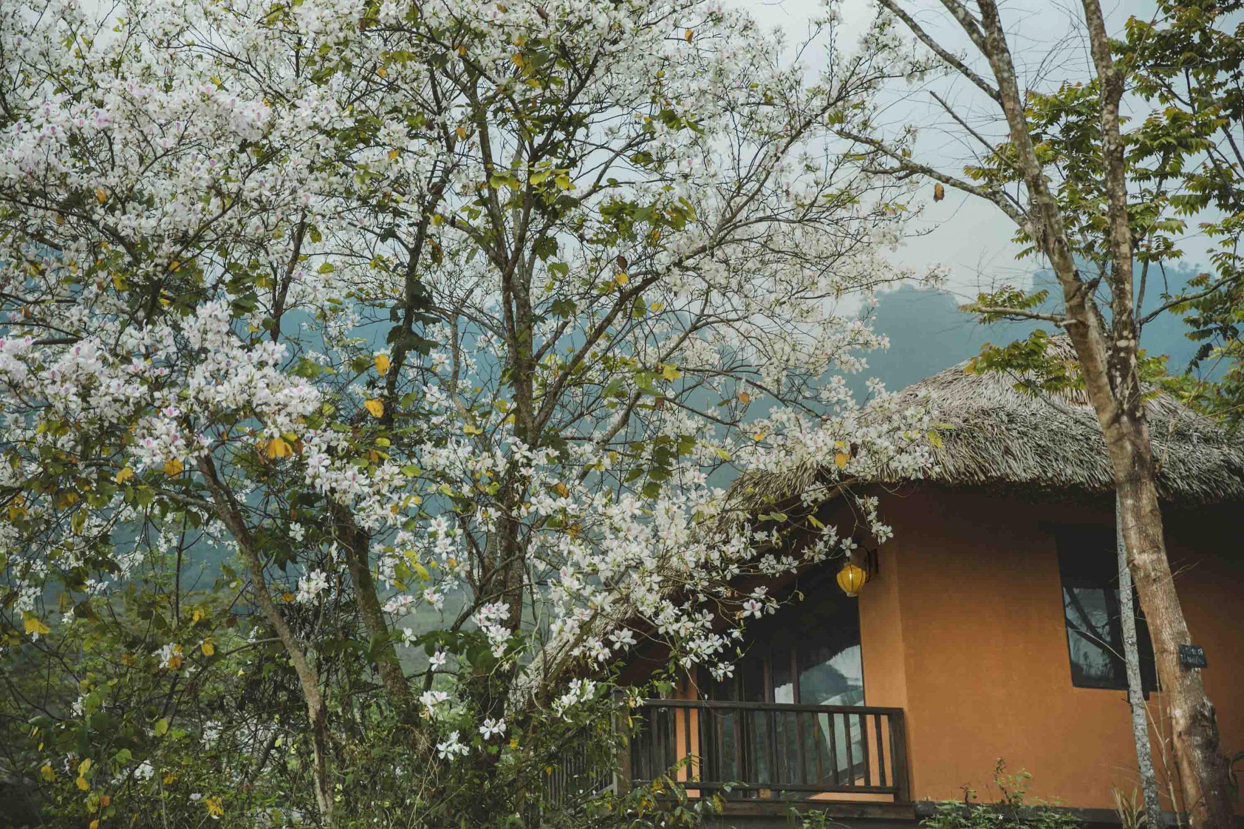 nghỉ dưỡng Avana Retreat 4