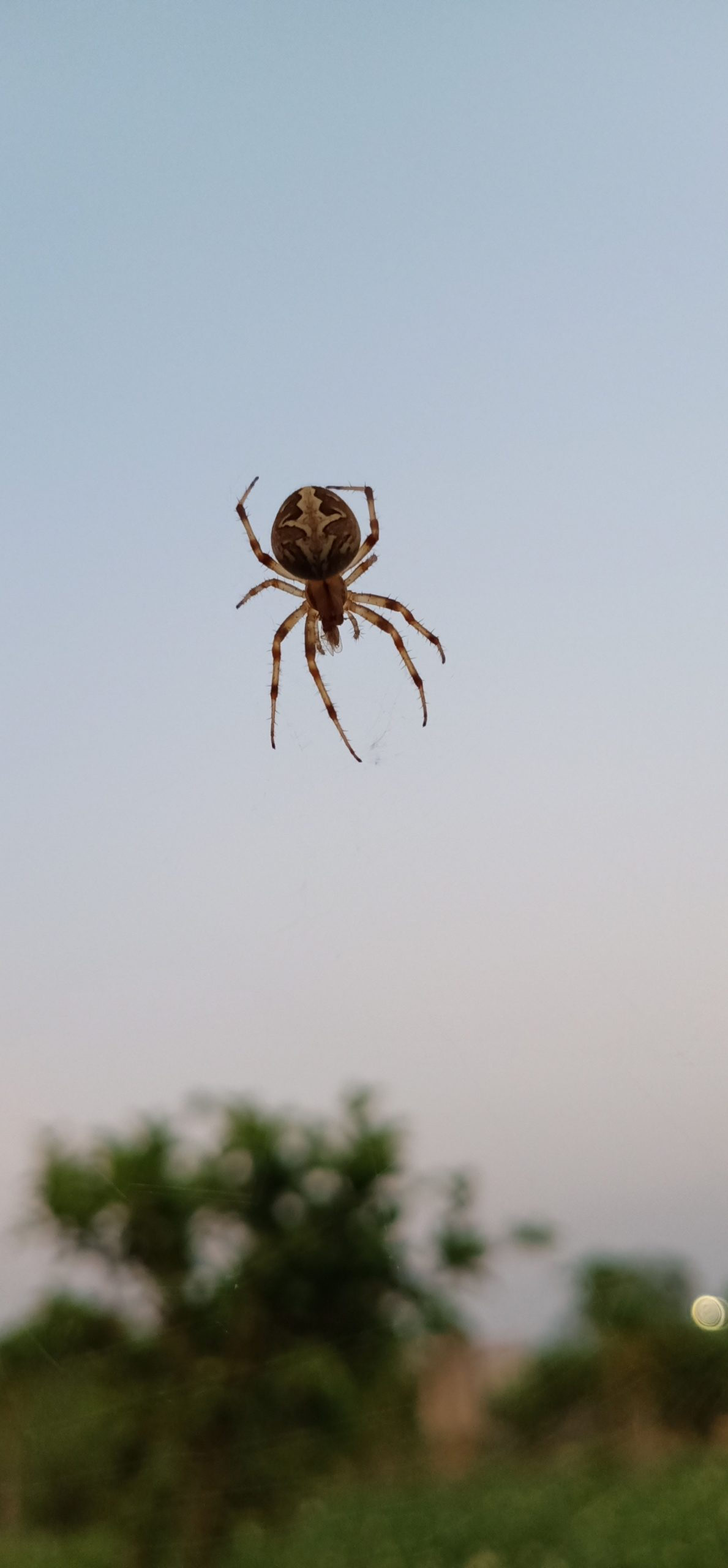 Giải mã giấc mơ về nhện