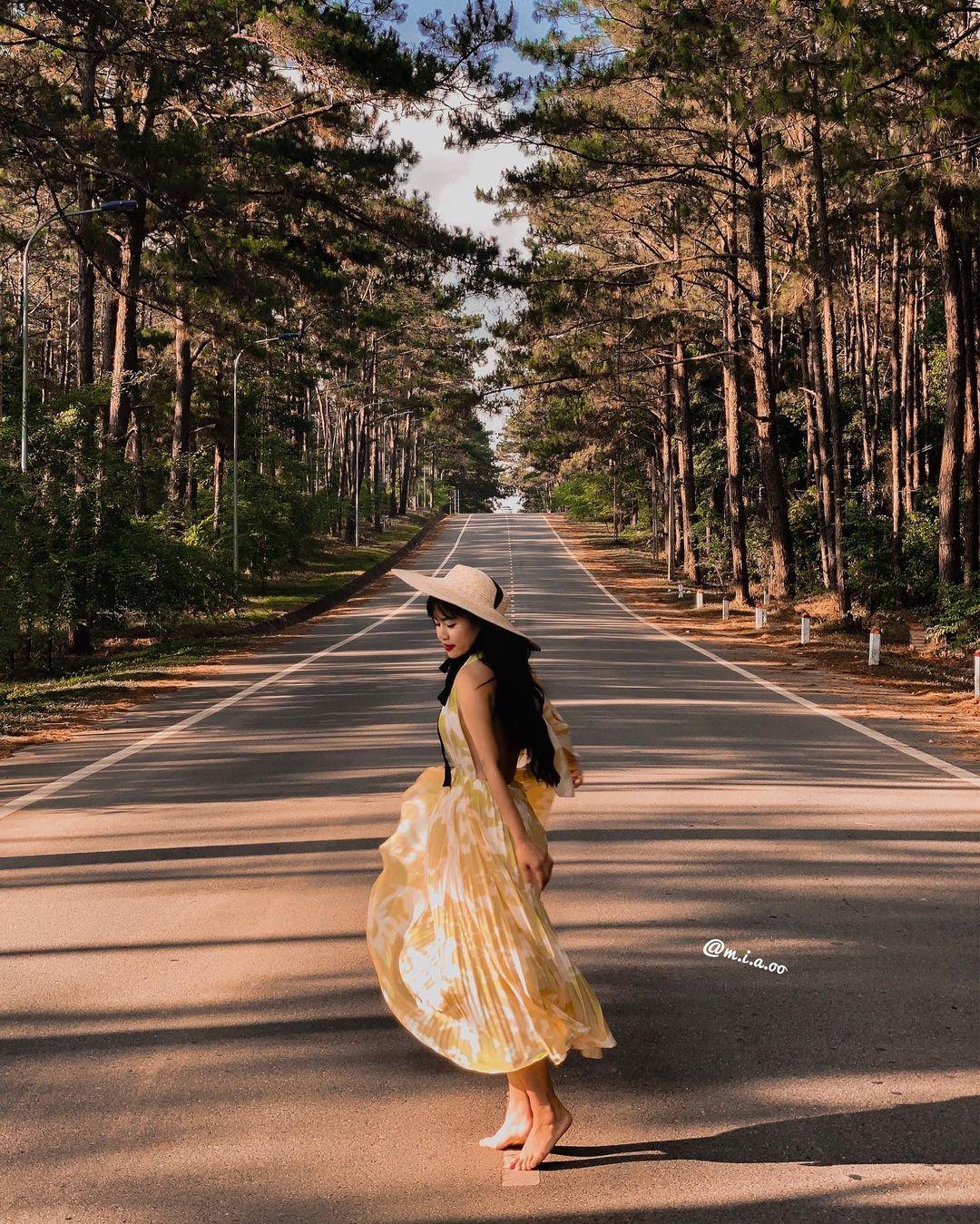 con đường thông là địa điểm check in khi du lịch Măng Đen
