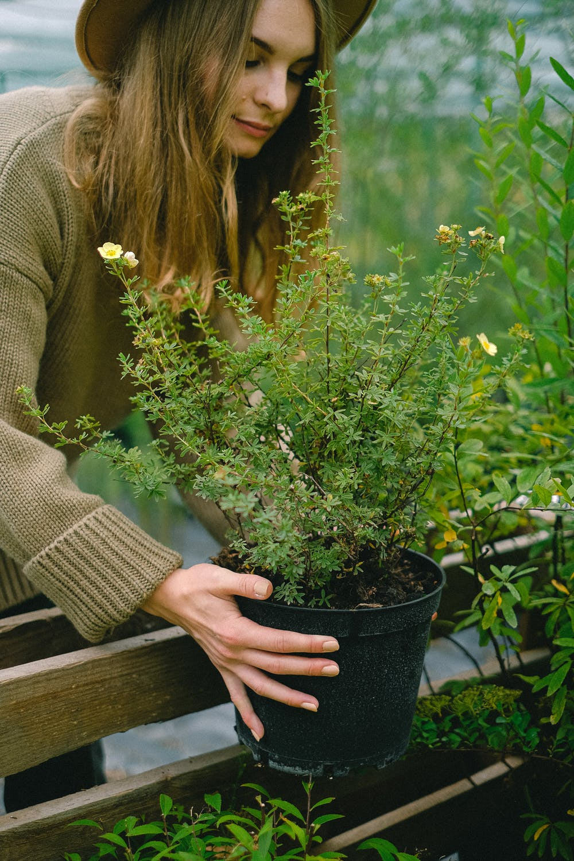 làm vườn cũng là lựa chọn nghề nghiệp