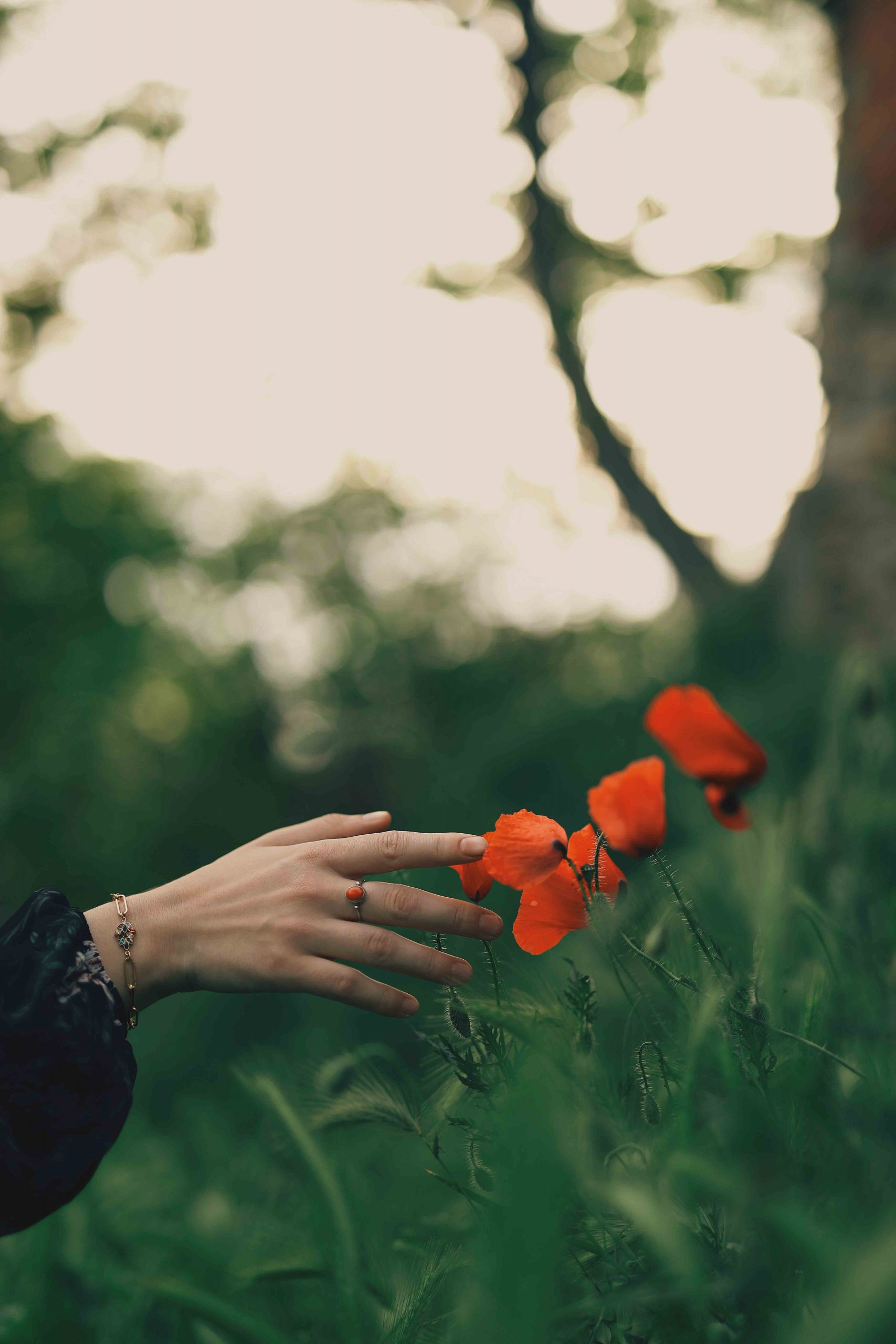 bàn tay chạm hoa đỏ và những con số thiên thần