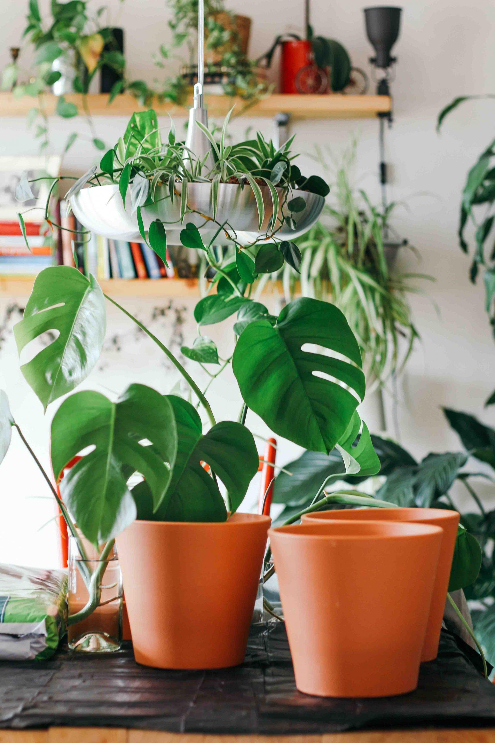 cách chọn chậu trồng cây trong nhà