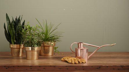 6 mẹo trồng cây trong nhà và cách chăm sóc hiệu quả nhất