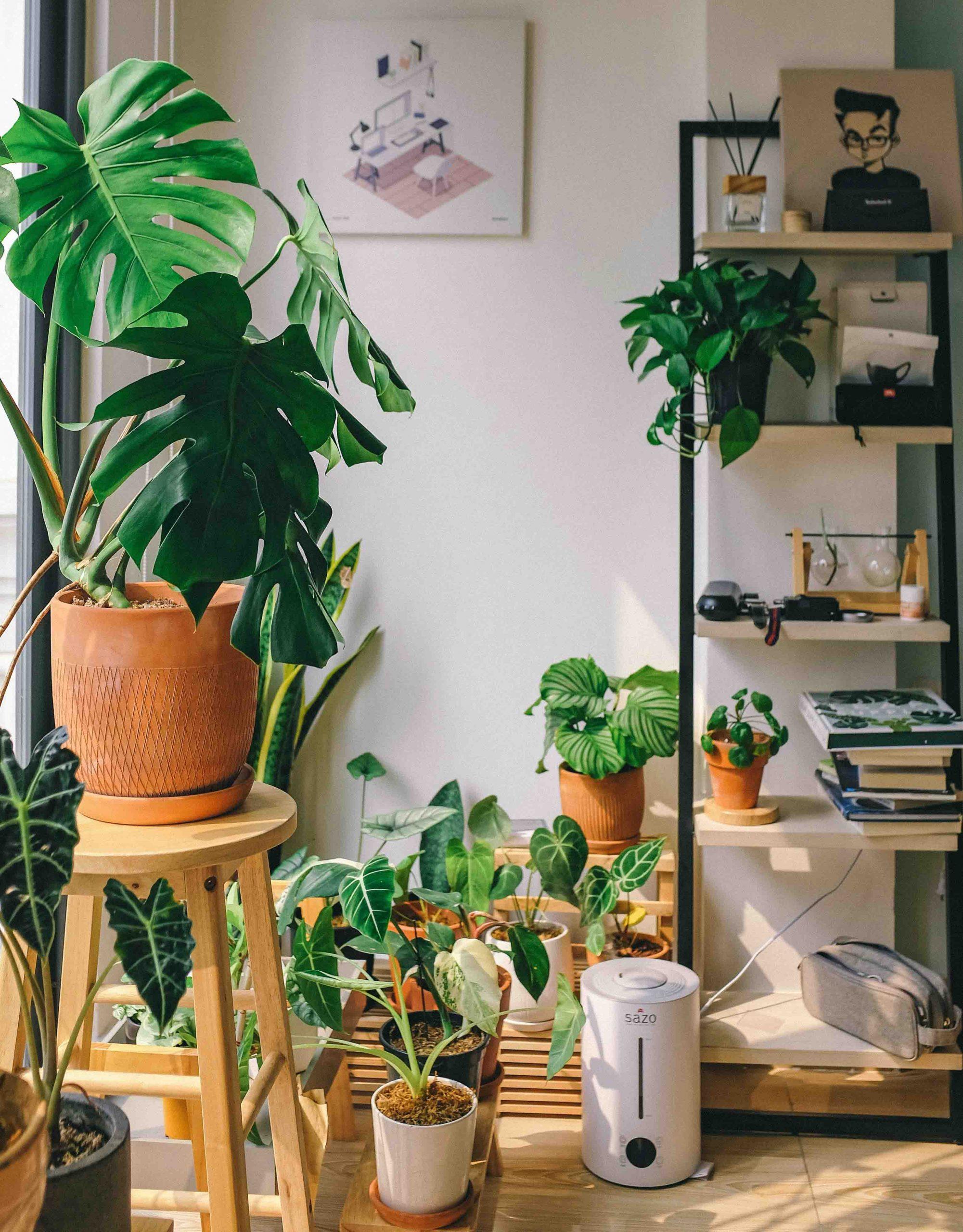 cách trồng cây trong nhà cải tạo không gian sống