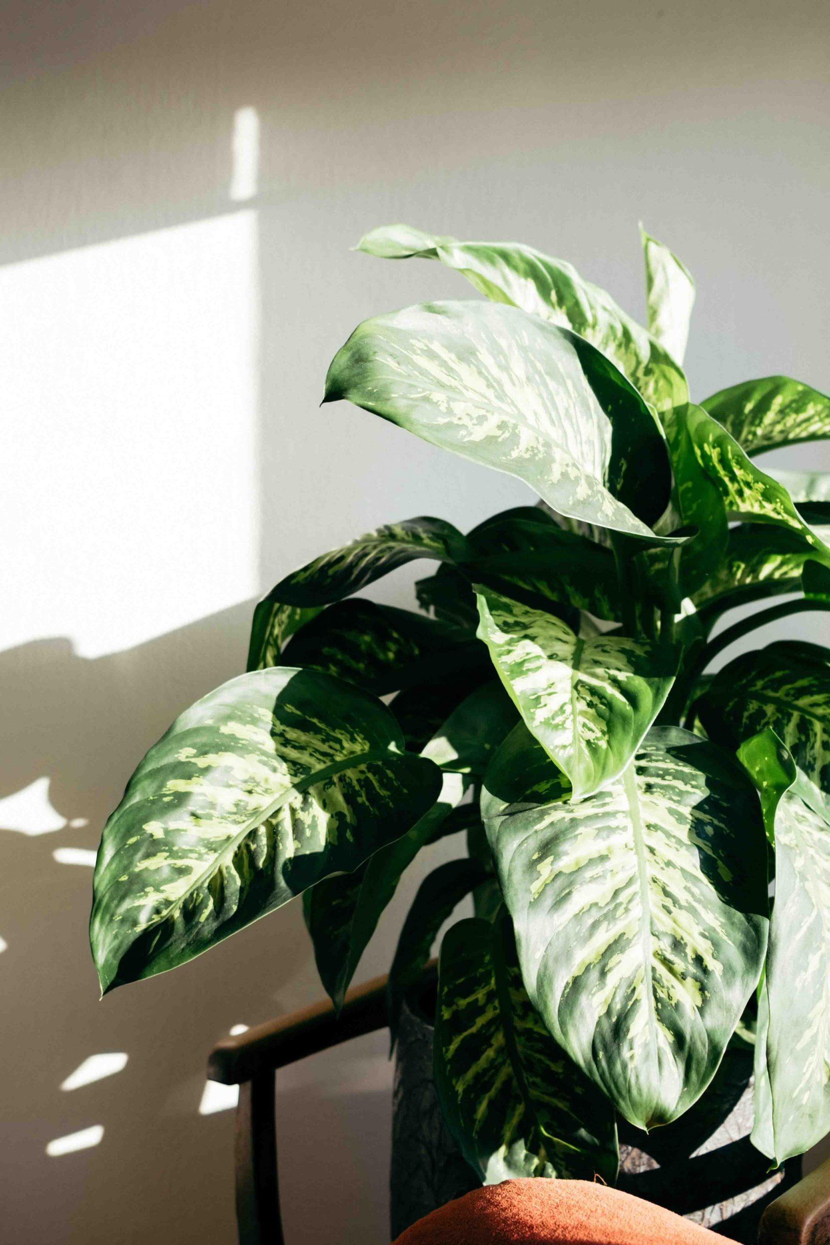 cách trồng cây trong nhà đón nắng