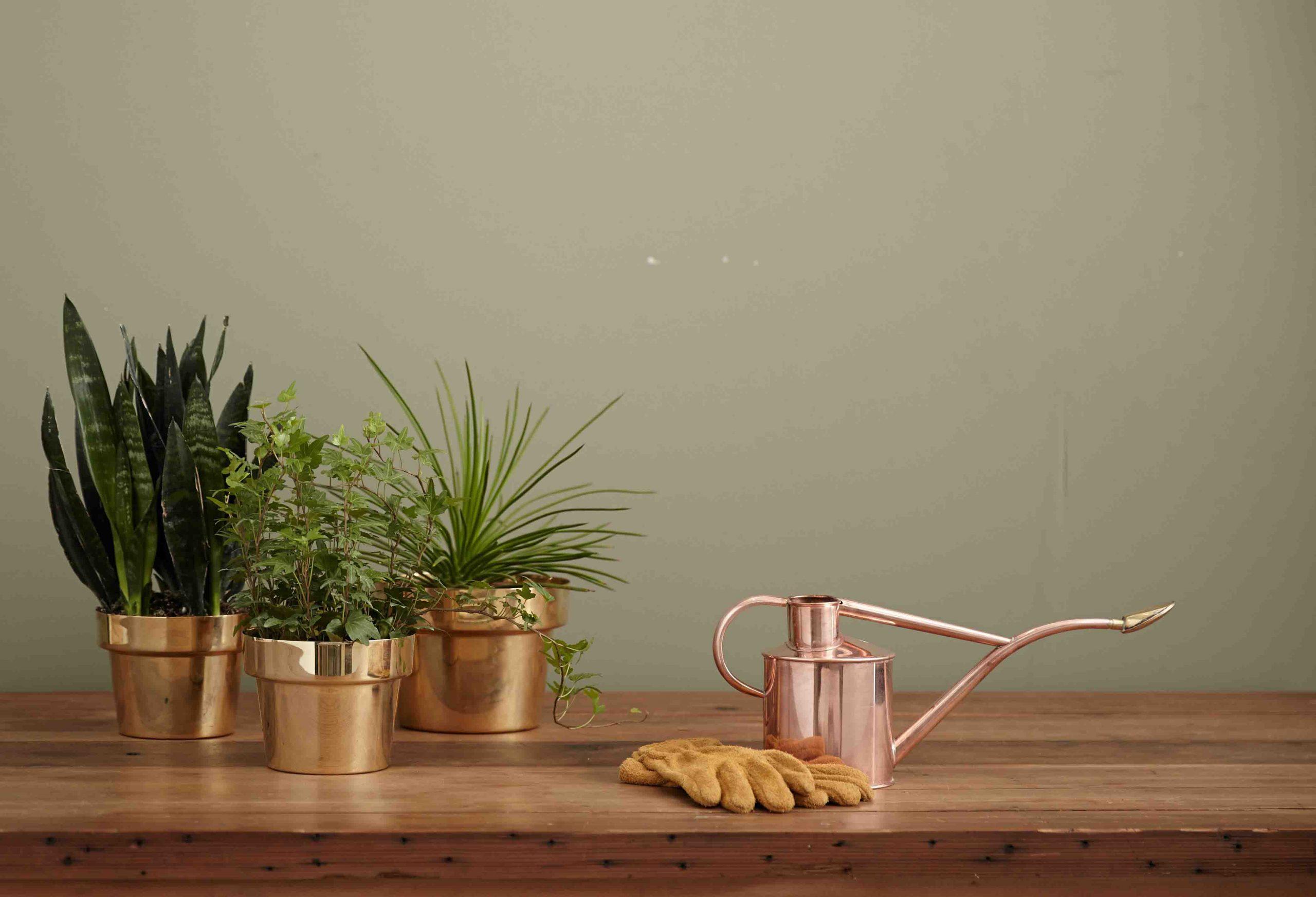 cách trồng cây trong nhà đẹp