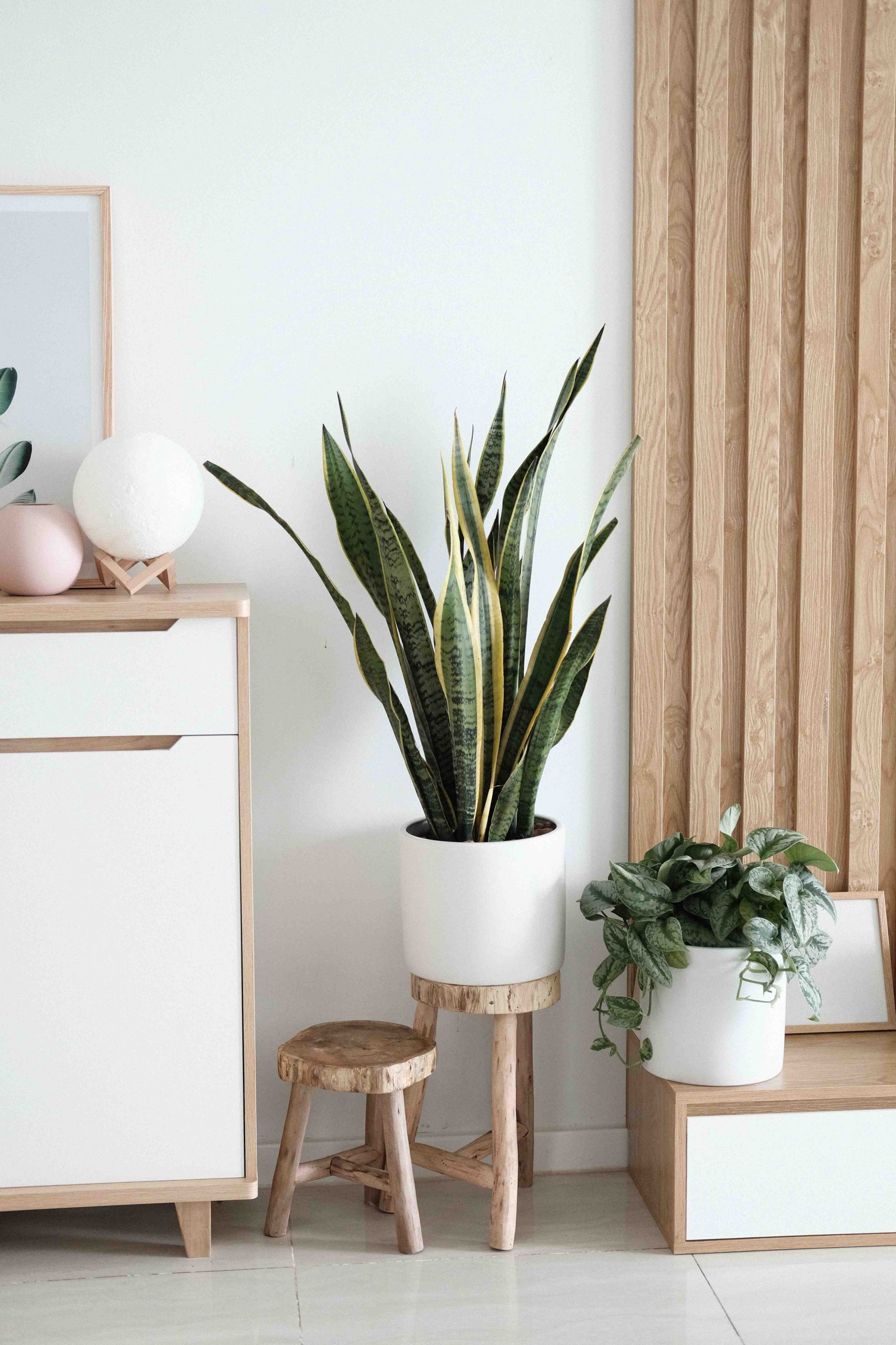 cách trồng cây trong nhà và chăm sóc cây