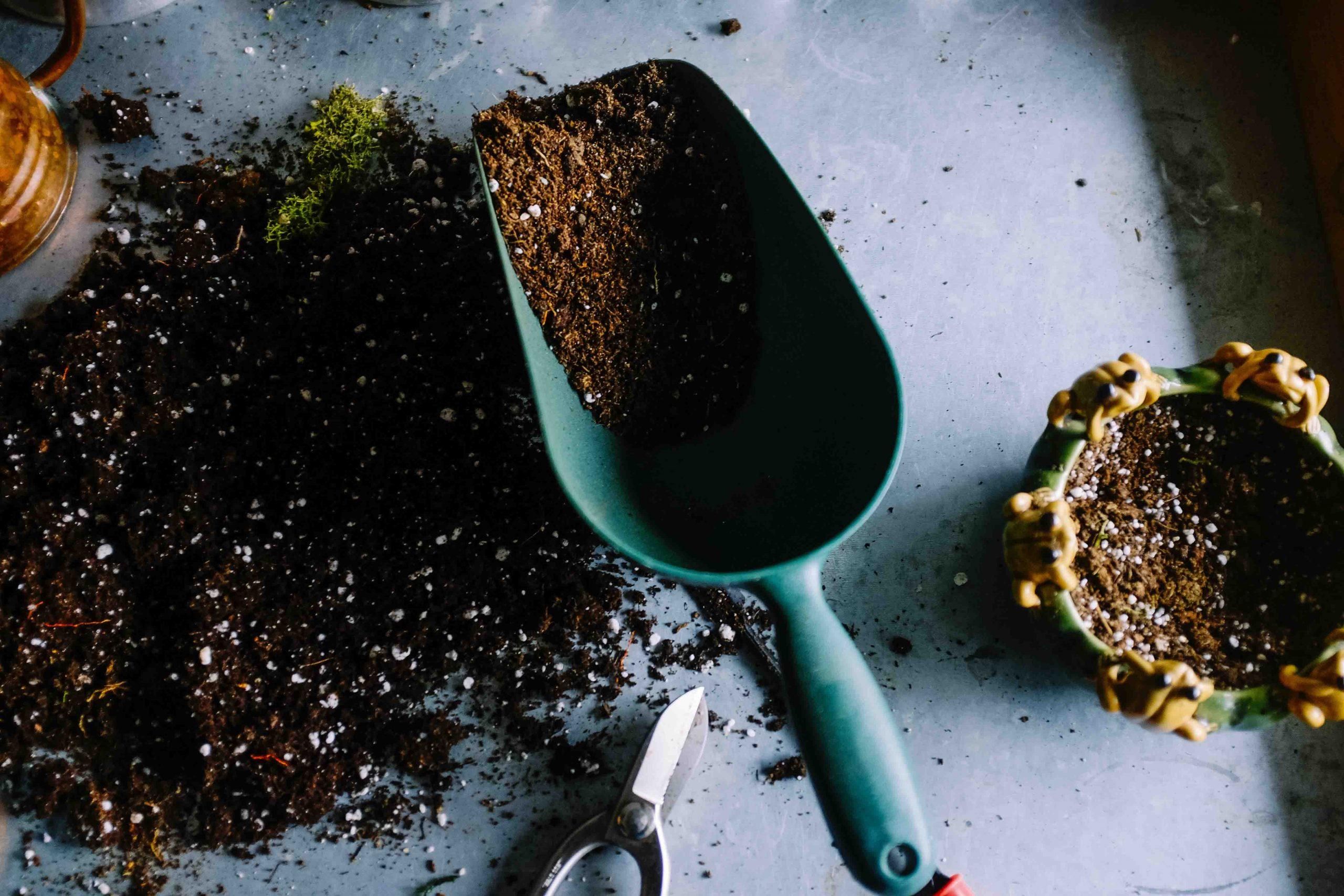 cách chọn đất trồng cây trong nhà