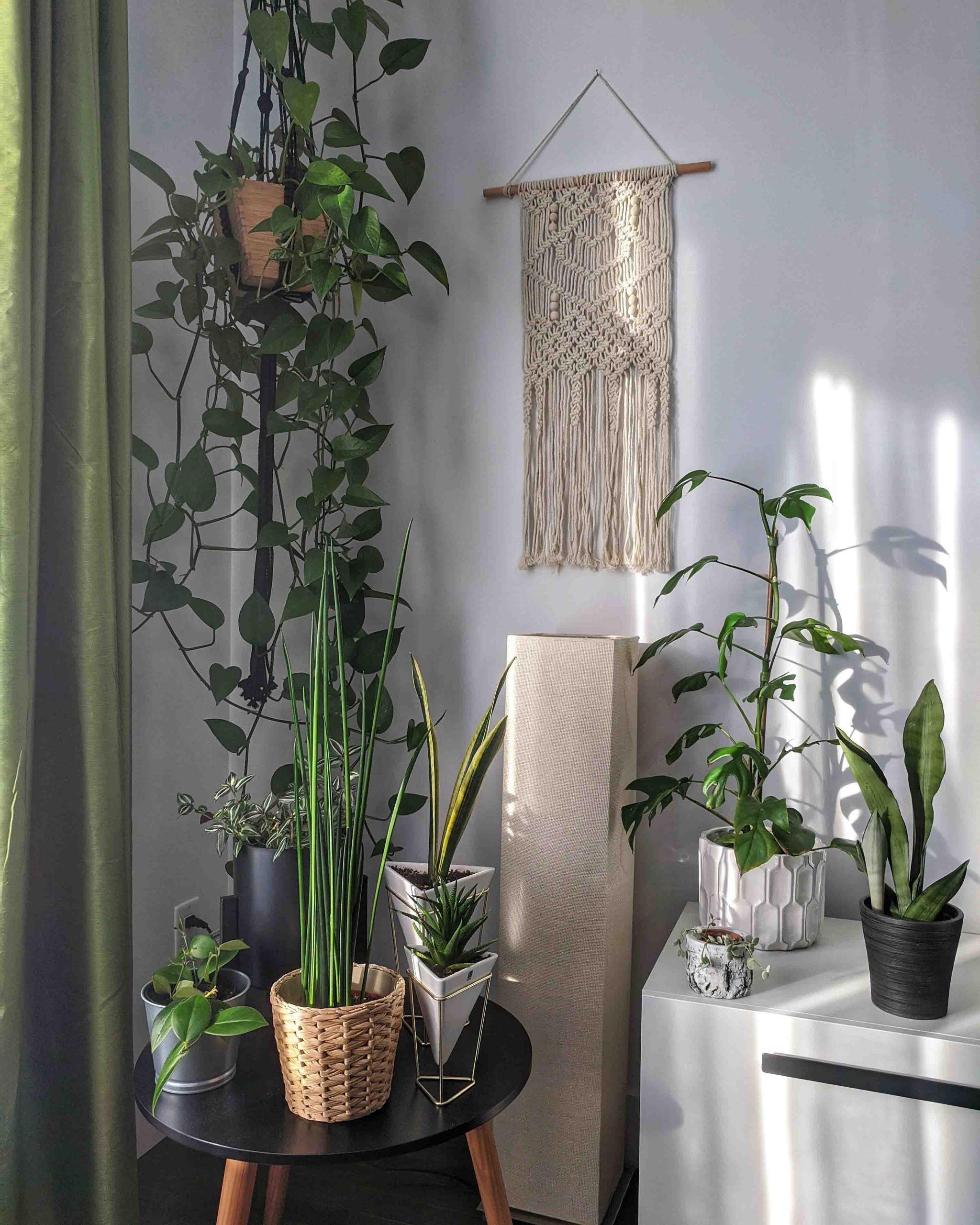 cách trồng cây trong nhà theo hướng nắng