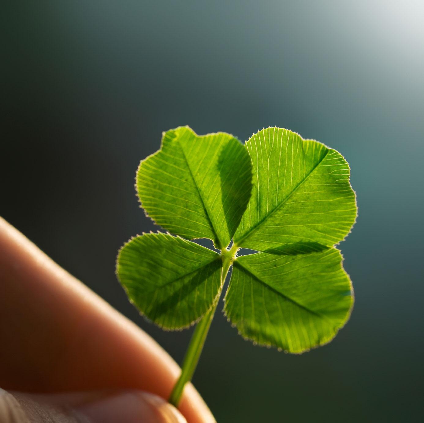 biểu tượng may mắn cỏ bốn lá