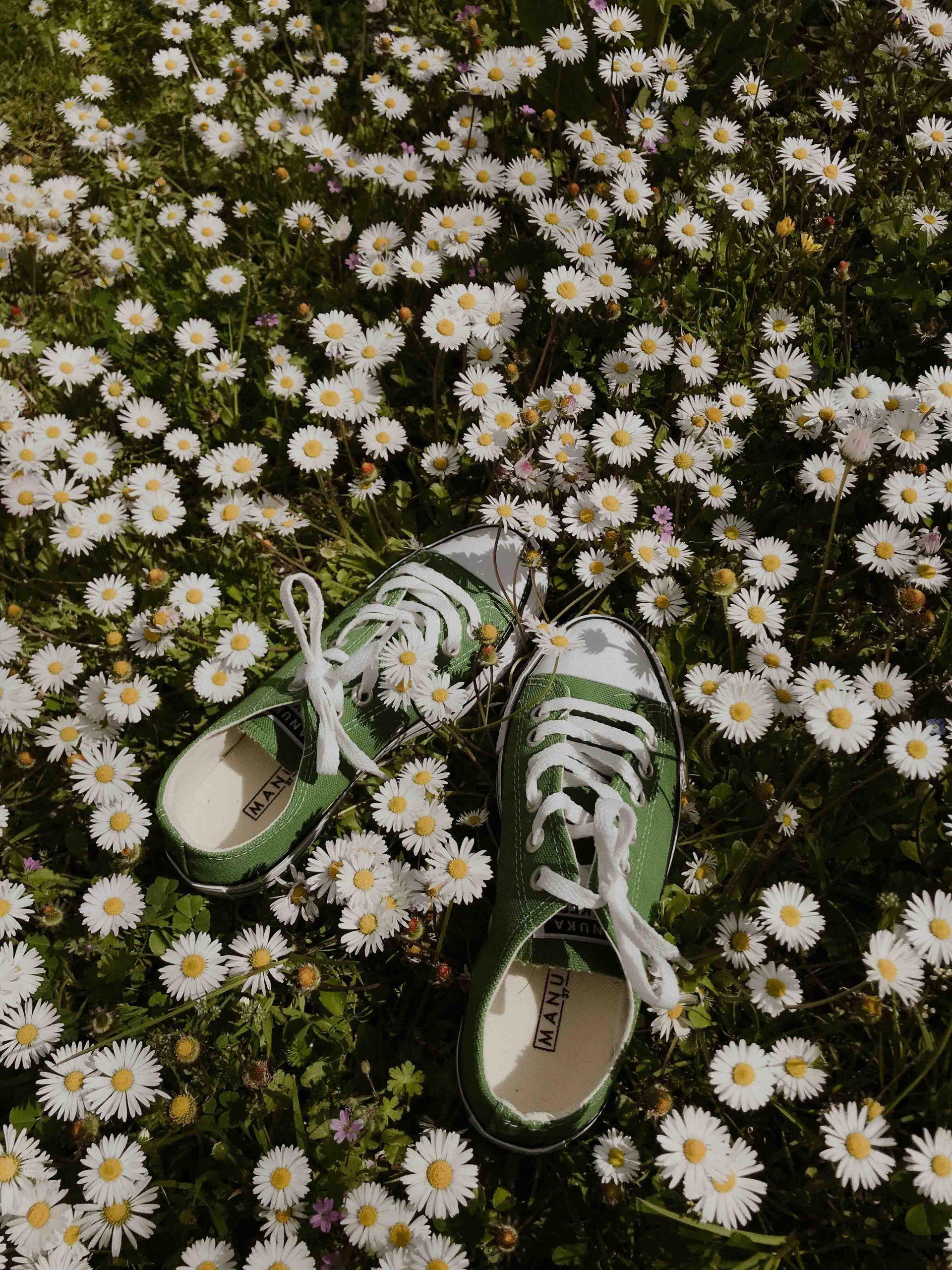 tinh thần đôi giày trên cánh đồng hoa