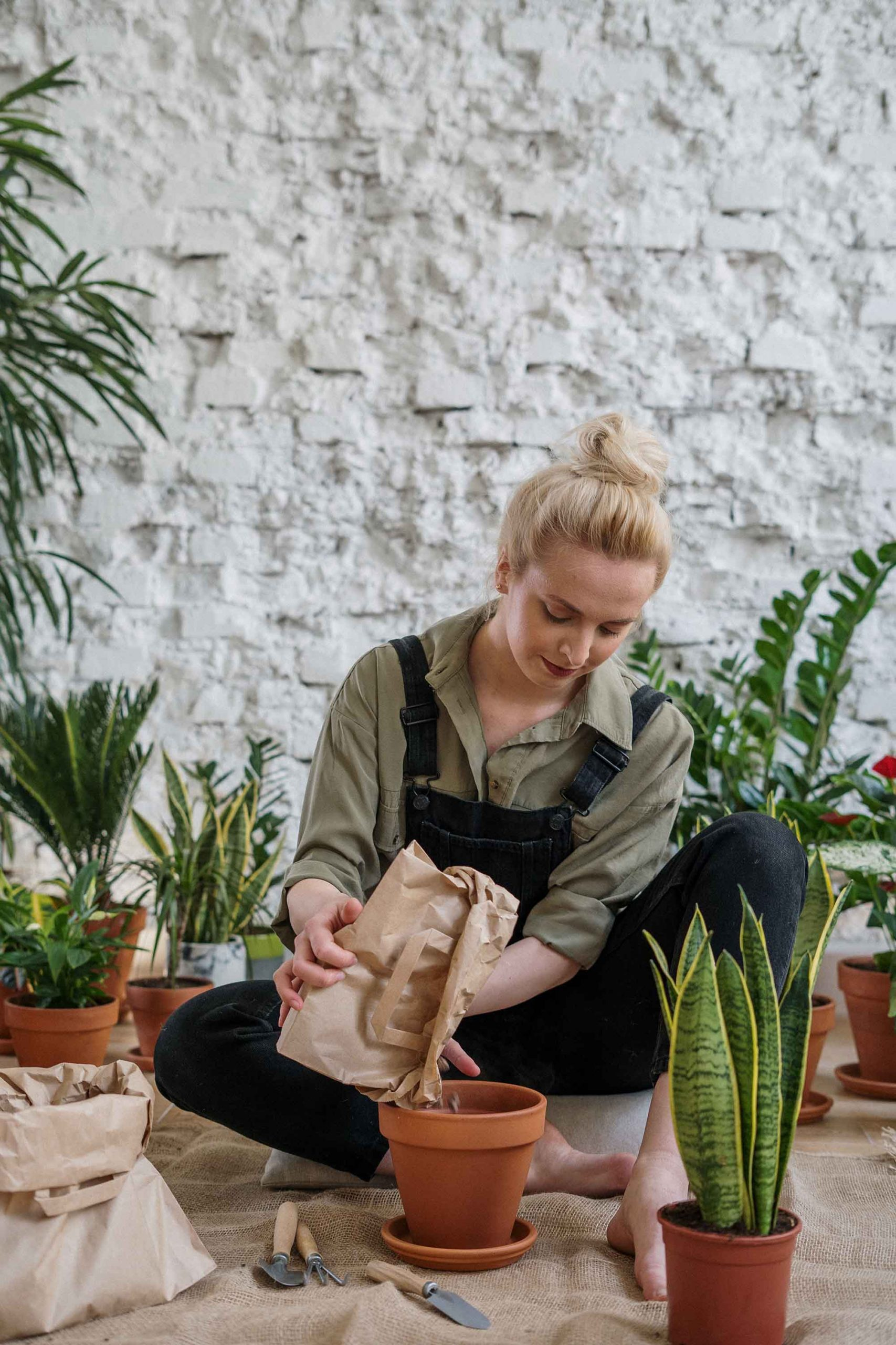 cách trồng hoa và chăm sóc hoa