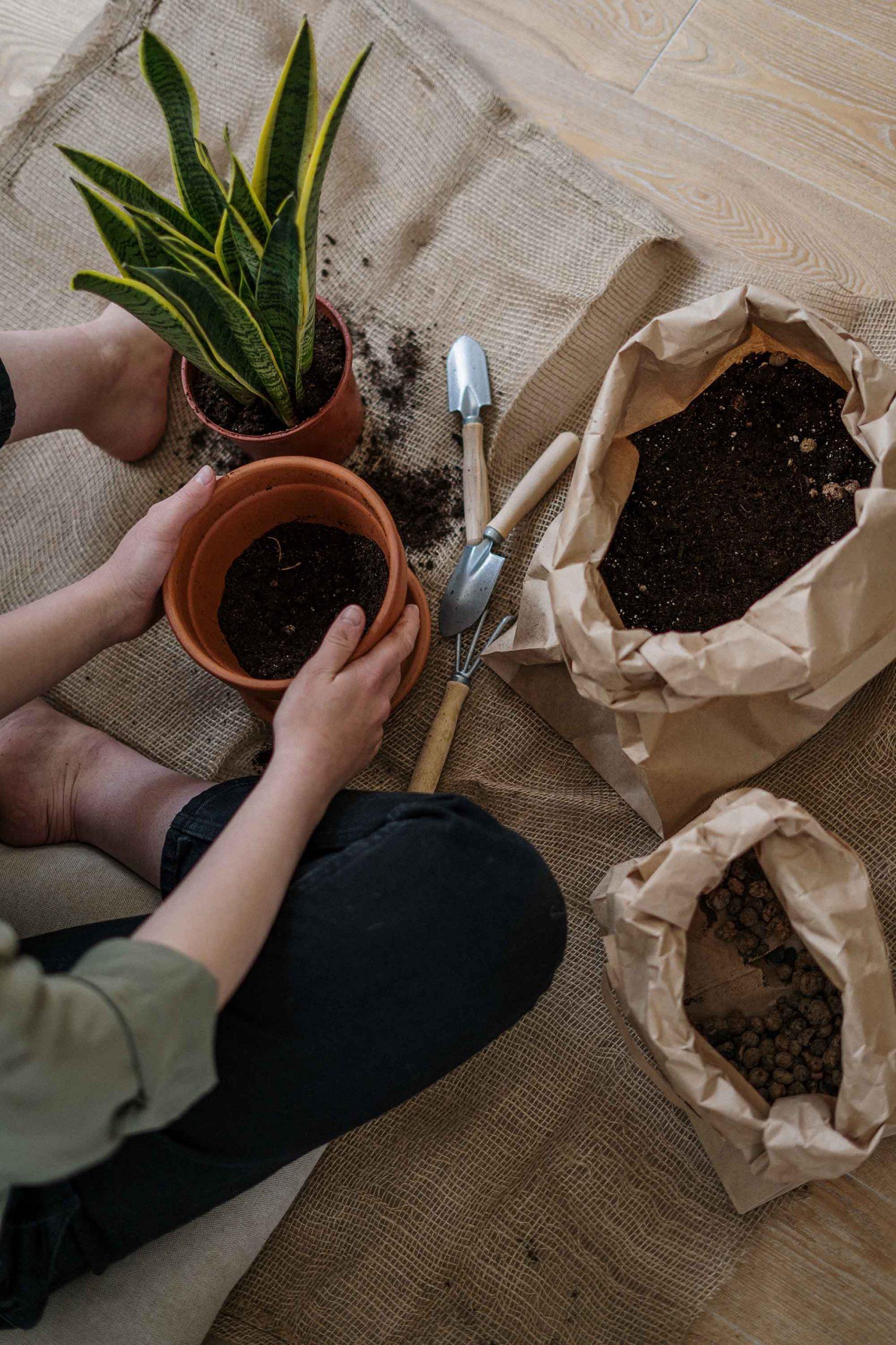 hướng dẫn cách trồng hoa