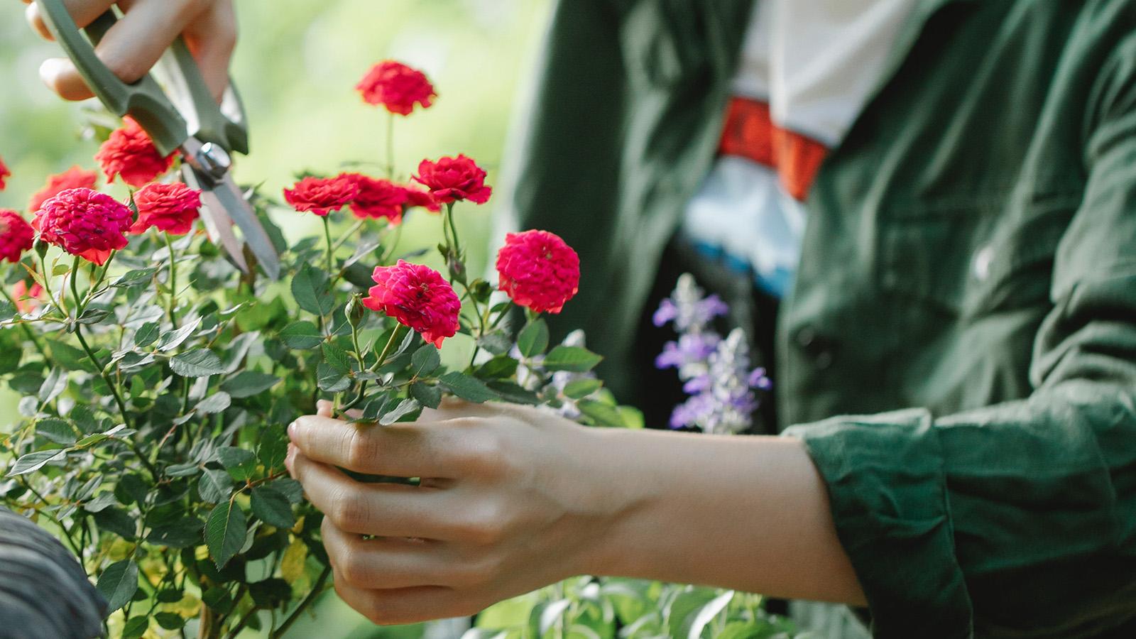 hướng dẫn trồng hoa cho người mới bắt đầu