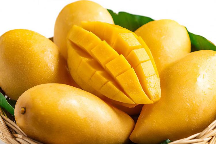 Xoài - trái cây bổ dưỡng cho cơ thể mùa Hè