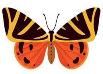 trắc nghiệm tính cách con bướm thứ hai