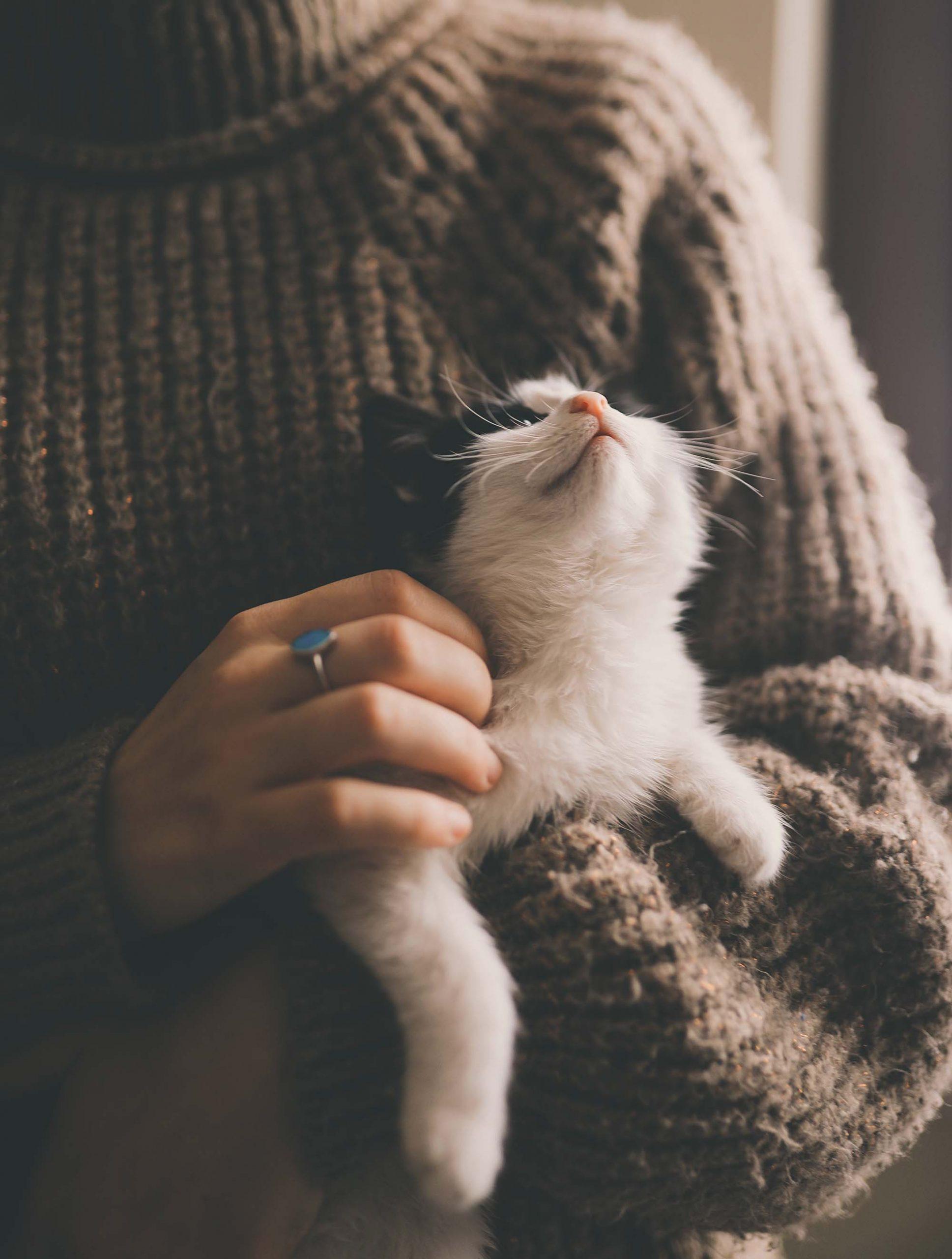 chơi với thú cưng cải thiện sức khỏe tinh thần
