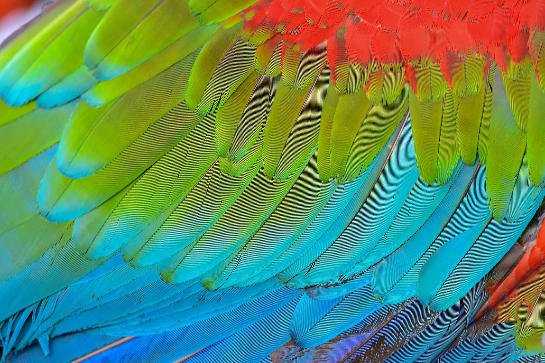 trắc nghiệm chiếc lông vũ của con vẹt